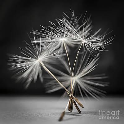 Dandelion Seeds Poster by Elena Elisseeva