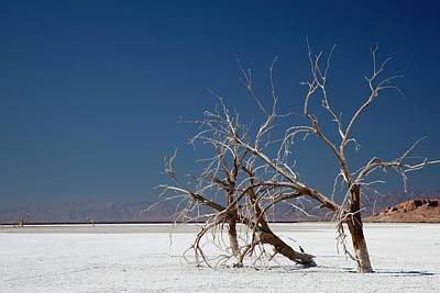 Dead Trees On Salt Flat Poster