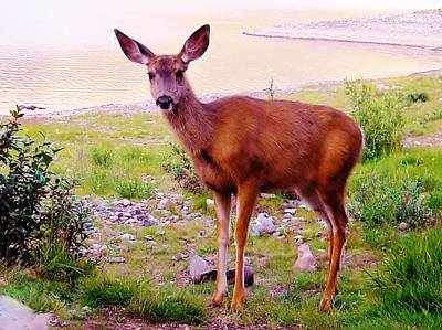 Deer Visit Poster by Cathy Long