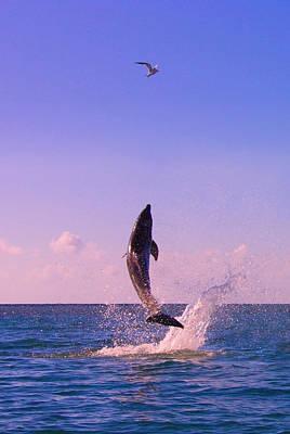 Dolphin Leaping From Sea, Roatan Poster by Keren Su