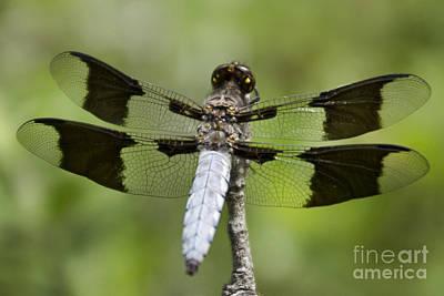 Dragonfly V7 Poster by Douglas Barnard
