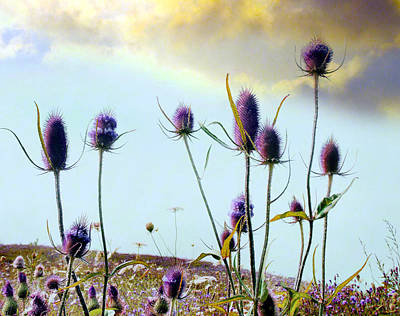 Dream Field Of Teasels Poster by Gothicrow Images
