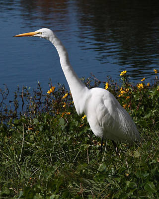 Egret In Flowers 8x10 Poster
