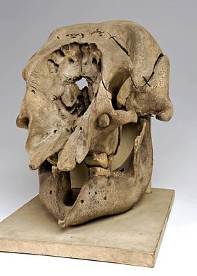 Elephant Skull Poster