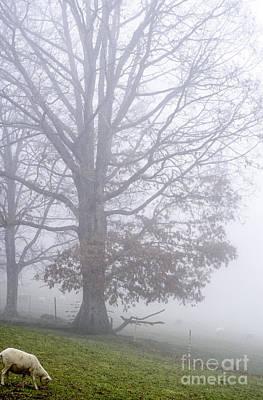 Ewe Foggy Day Poster
