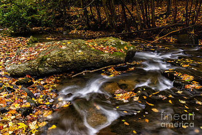 Fall Color Straight Creek Poster by Thomas R Fletcher