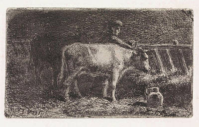 Farmer Between Two Cows In A Manger In A Stable Small Poster