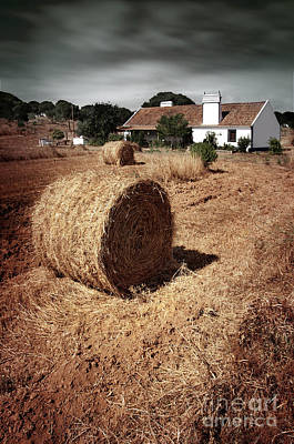 Farmland Poster by Carlos Caetano