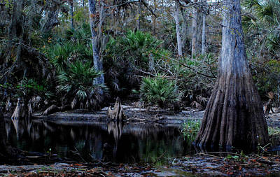 Fisheating Creek 05 Poster by Carol Kay