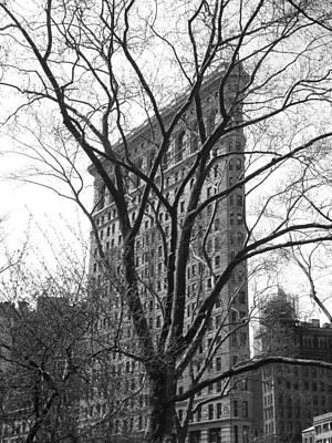 Flat Iron Tree Poster