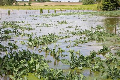 Flooded Crops Poster by Ashley Cooper