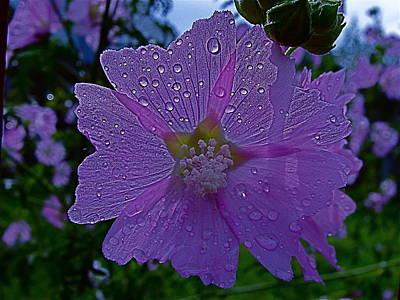 Flower After Rain Poster