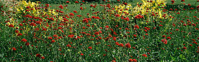 Flowers In A Botanical Garden, Buffalo Poster by Panoramic Images