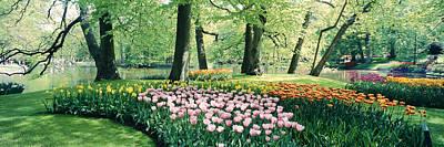 Flowers In A Garden, Keukenhof Gardens Poster