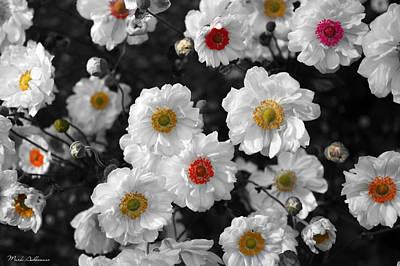 Flowers  Poster by Mark Ashkenazi