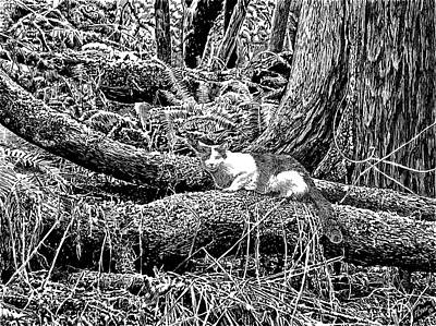 Forest Cat Poster