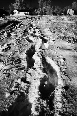 fresh footprints crossing deep snow in field towards small rural village of Forget Saskatchewan Cana Poster