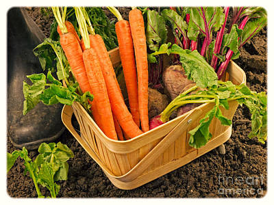 Fresh Garden Vegetables Poster