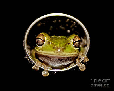 Poster featuring the photograph Frog by Olga Hamilton