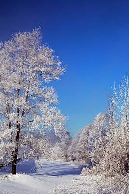 Frost On Trees In Winter Poster by Jim West