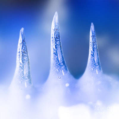 Frozen Icicle Melting From Snow And Ice Glacier  Poster