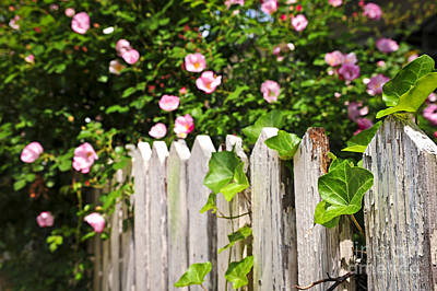 Garden Fence With Roses Poster