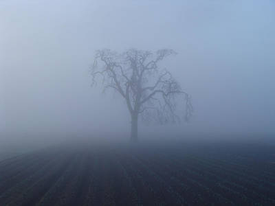 Garry Oak In Fog  Poster