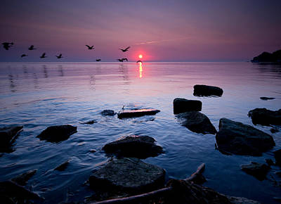 Geese At Sunrise Poster