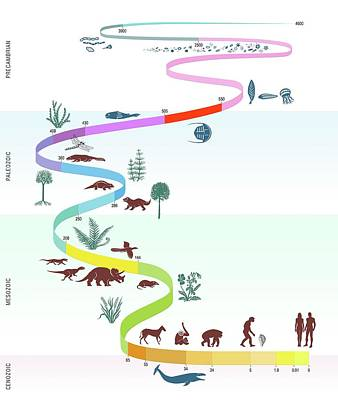 Geological Timescale And Life Poster by Gary Hincks