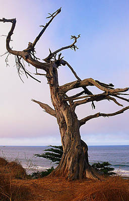 Ghost Tree In Carpinteria Poster by Ron Regalado