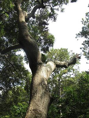 Poster featuring the photograph Gnarled Tree 2 by Cathy Lindsey