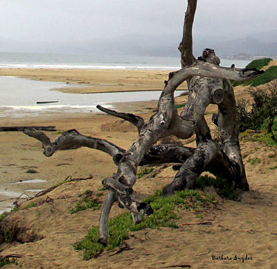 Gnarley Tree Poster by Barbara Snyder