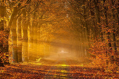 Golden Rays Of Autumn Poster by Ron Buist