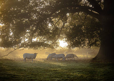 Grazing Under The Tree - Variation 1 Poster by Chris Fletcher