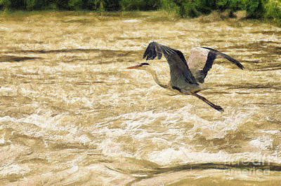 Great Grey Heron In Flight Poster by Odon Czintos