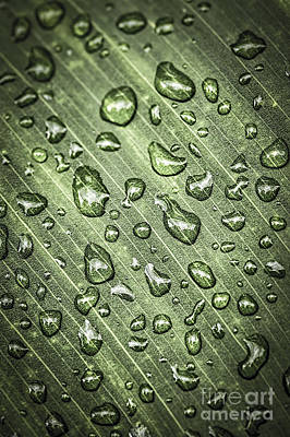 Green Leaf With Raindrops Poster by Elena Elisseeva
