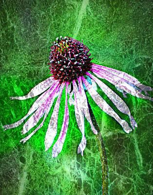 Gritty Coneflower Poster by Marty Koch