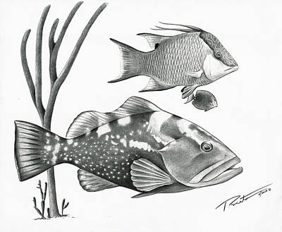 Grouper Hog Fish Poster by Pedro  Prieto