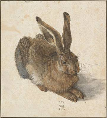 Poster featuring the painting Young Hare by Albrecht Durer