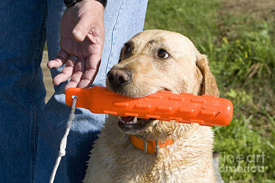Hand Reaching For Dogs Toy Poster by Linda Freshwaters Arndt
