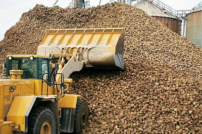 Harvested Sugar Beets Poster by Jim West