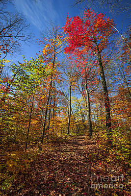 Hiking Trail In Fall Forest Poster
