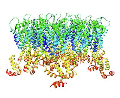 Hiv-1 Capsid In Intact Virus Particle Poster