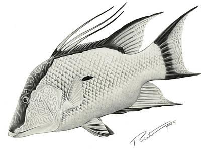 Hog Fish Poster by Pedro  Prieto