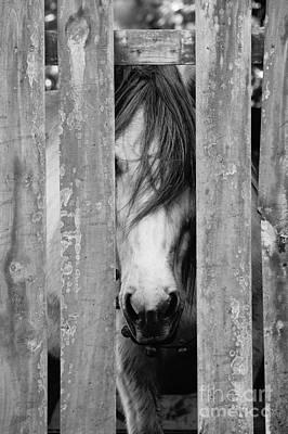 Horse Board Poster by Lynda Dawson-Youngclaus