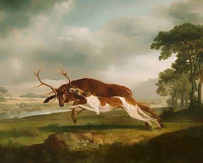 Hound Coursing A Stag Poster by Mountain Dreams