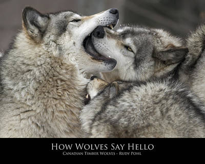 How Wolves Say Hello Poster by Rudy Pohl