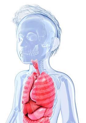 Human Anatomy Poster by Pixologicstudio