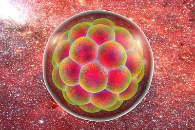 Human Embryo Poster by Kateryna Kon
