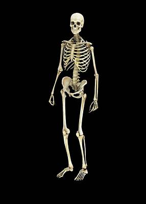 Human Skeleton Poster by Mikkel Juul Jensen